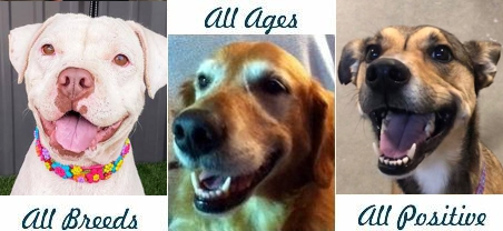All Breeds, All Ages, All Positive